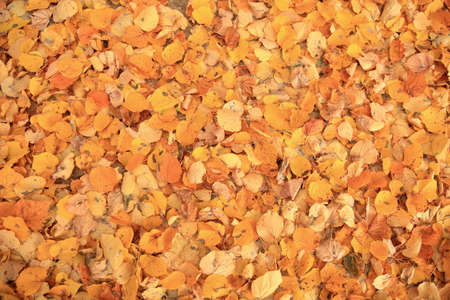 Lying leaves under a tree is a preview of the upcoming winter.