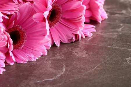Gerbera with a large beautiful inflorescence is a wonderful decoration.