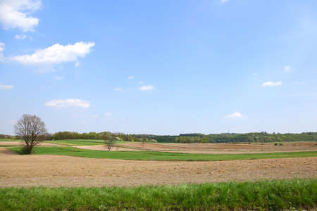 Spring landscape on agricultural fields. Whenever nature wakes up, it amazes with the amount of shades of green.