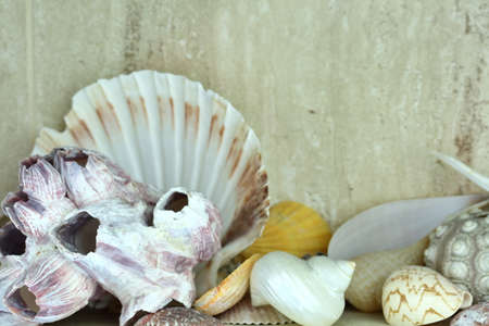 Shells of crustaceans in different colors and shapes.