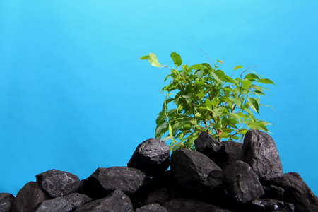 A green young tree grew on the coal heap. The whole process of CO2 from CO2.