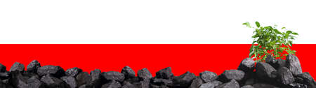 Coal in the background with the flag of Poland and a small green deciduous tree.