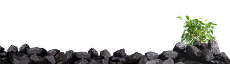 A heap of hard coal with a small deciduous tree in the background.