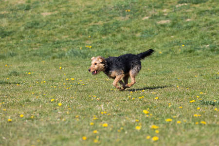 A dog runs on the green lawn and has learned to properly retrieve a rubber ball. Stock fotó