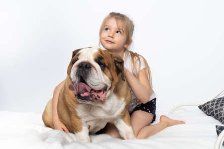 A moment of joy and dreams while playing with the English Bulldog. Child and dog. A breed with a brown coat with white patches. Banco de Imagens