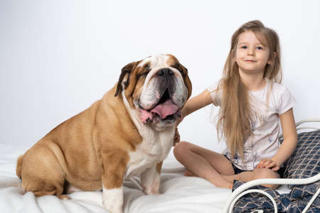 Two friends, a girl and a dog, are sitting together on the bed. The girl is petting the dog. A breed with a brown coat with white patches. Banco de Imagens