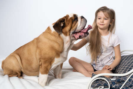 Two friends, a girl and a dog, are sitting together on the bed. The girl is petting the dog. A breed with a brown coat with white patches.