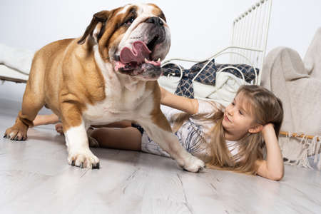 An old and fat dog and a tiny and young girl sit on the floor by the bed in the bedroom. A breed with a brown coat with white patches. Banco de Imagens