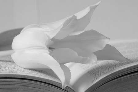 Tulip on book Stock Photo - 17623789