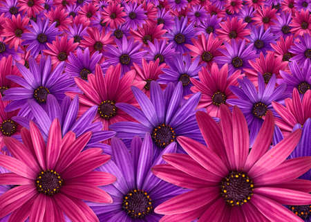 pink and purple flowers background photo