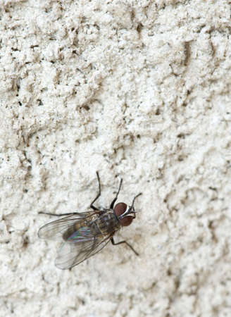 Macro shot of fly on the concrete wall Stock Photo