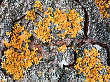 Textured old bark background photo