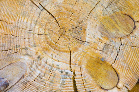 Close-up shot of wooden cut Stock Photo - 4809592
