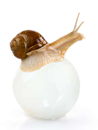 Snail on the glass ball isolated.