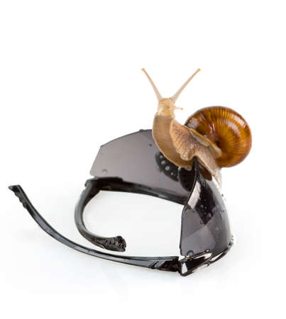 Snail on the sunglasses isolated. Stock Photo - 4904970