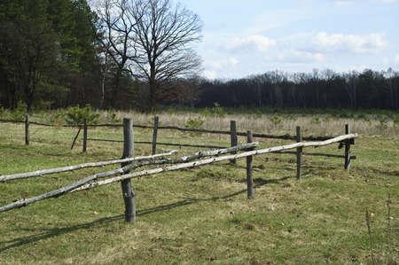 Wood landscape Stock Photo - 13569609