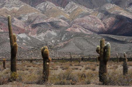 parco nazionale di Los Cardones in Argentina Ande Archivio Fotografico