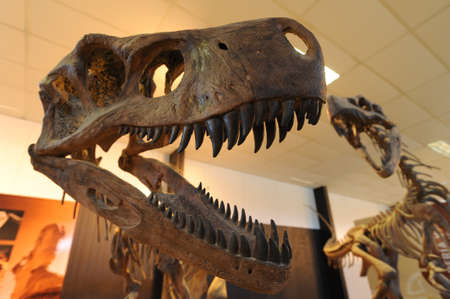 dinosaurs at the museum of Valle della luna