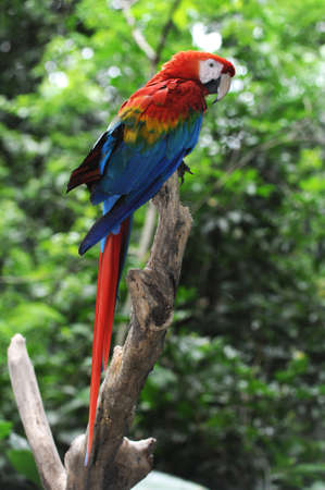 parrot Arara Macao Stock Photo