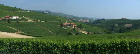 vineyard of Barolo