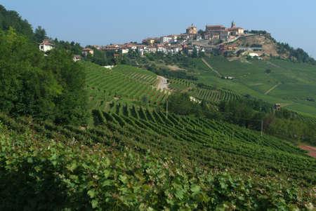 village and vineyard of La Morra Editorial