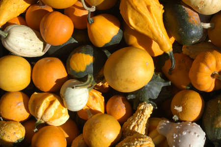 pumpkins at the market Stock Photo - 10921420