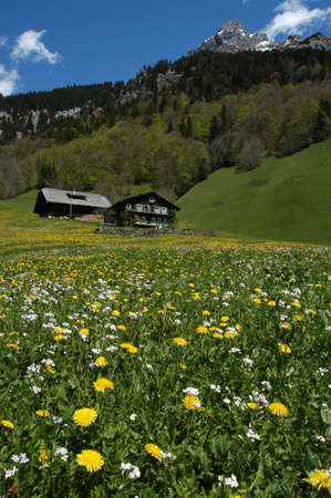 farm on flower field at Engelgerg on Swiss alps photo