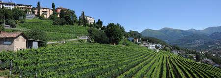 vigna di Porza nei pressi di Lugano sulla Svizzera italiana