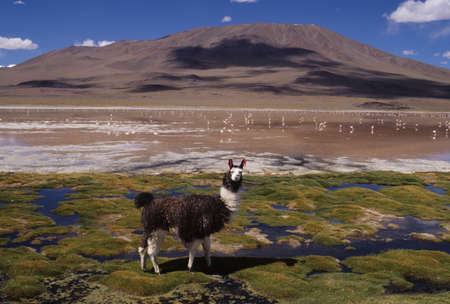 Santa de Ayes National Park on the bolivian andes photo