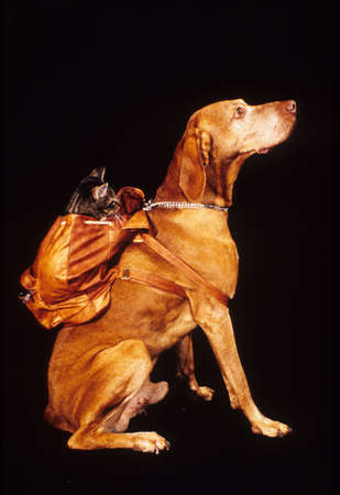 Dog with a cat on the backpack photo