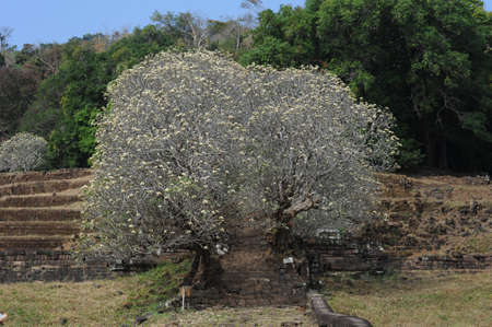 the archaeological site Wat Phu on Laos Фото со стока