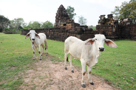 buriram: archaeological site of Khok Meoang on Thailand Stock Photo