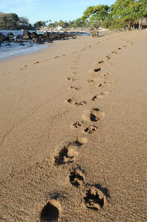 Footprint on the beach of Los Cobanos on El Salvador photo