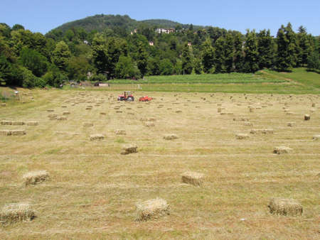 Bale of hay on a field at Magliaso on Switzerland photo