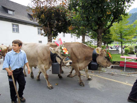 Engelberg, Switzerland - 28 September 2013: Farmers with a herd of cows on the annual transhumance at Engelberg on the Swiss alps