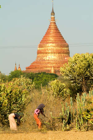pices: Bagan, Myanmar - 24 January 2010: Two woman collecting pices of wood in front of Dhammayazika pagoda at the archaeological site of Bagan on Myanmar Editorial