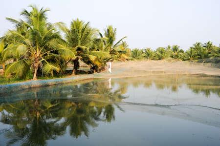 backwaters: Shrimp farm on the backwaters of Kollam on India