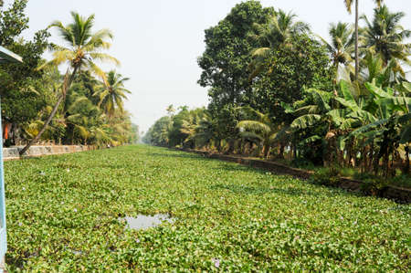 alleppey: The backwaters near Alleppey on India Stock Photo