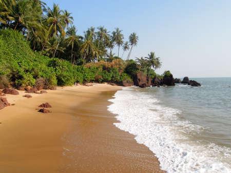 Coconut palms on the beach near the village of Thottada on Kerala, India Stock Photo