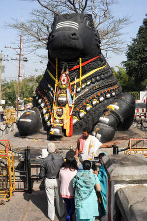 mysore: Mysore, india - 23 January 2015: The Nandi bull on Chamundi Hill is a particularly notable statue that dates from 1659 and pilgrims from all over India climb over 1000 steps to pay their respects