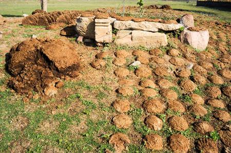dung: Drying cow dung cakes at Khajuraho on India