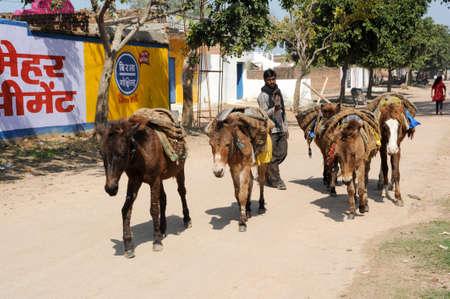 khajuraho: Khajuraho, India - 31 de enero 2015: El hombre con su manada de caballos en la calle de Khajuraho en la India