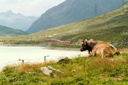 treno espresso: Treno Bernina Express presso il lago di Ospizio Bernina sulle Alpi svizzere
