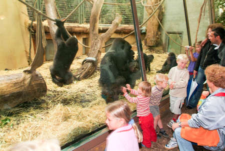 zurich: Zurich, Switzerland - 22 August 2006: People observing gorillas in the Zoo Zurich on Switzerland