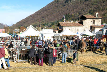 martino: Mendrisio, Switzerland - 10 november 2010: People observing the animals at the rural fair of San Martino in Mendrisio in Switzerland