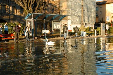 coastal: Lugano, Switzerland - 30 november 2002: people looking to swans and ducks swimming on the flooded streets of Lugano on Switzerland