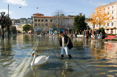 devastating: Lugano, Switzerland - 30 november 2002: people looking to swan swimming on the flooded streets of Lugano on Switzerland