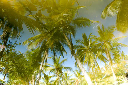 gleams: Palm trees of playa bonita at Las Terrenas in Dominican Republic