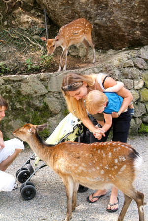 pat: Goldau, Switzerland - 29 august 2008: people who feed and pat the fawns at the zoo of Goldau in Switzerland Editorial