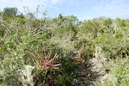 enigma: Landscape at the vegetation near a cenote at Giron on Cuba Stock Photo